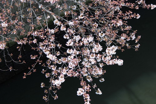 20170402_目黒イーストエリア桜まつり (1154)