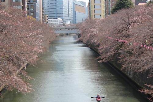 20170402_目黒イーストエリア桜まつり (952)